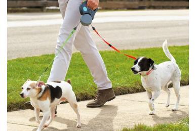 Как выбрать поводок (рулетку) для собак
