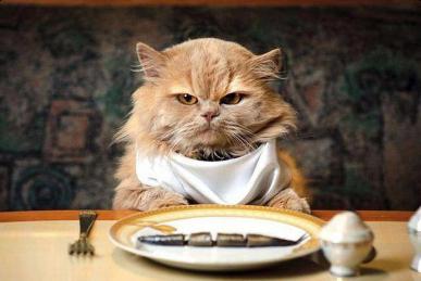 Лакомства для кошек - что нужно знать